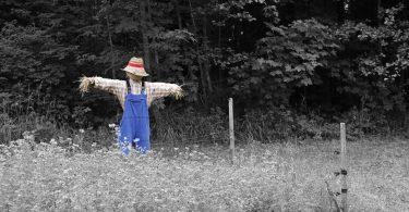 Chawton scarecrow