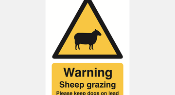 sheep-grazing