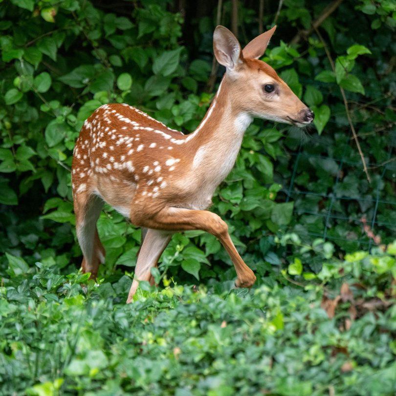 deer-5367751_1920